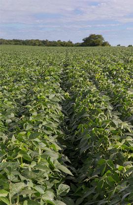 New Jersey Soybean Board